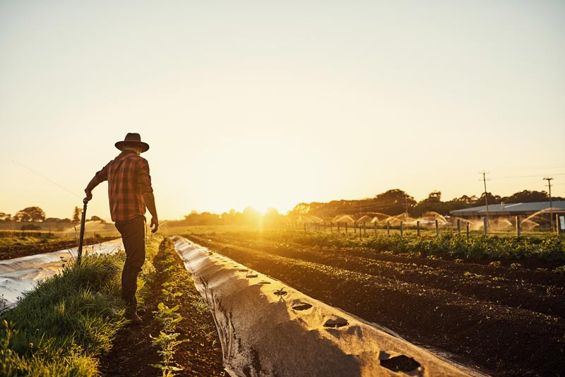 Farmer with cowboy hat in field at sunset