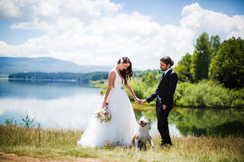 A bride and groom outside at a lake with their dog on a sunny day